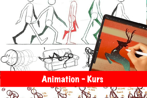 Animation Anfägerkurs
