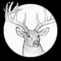 Tier Illustration Kurs