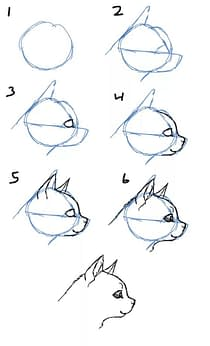 Tier Illustrator Kurs