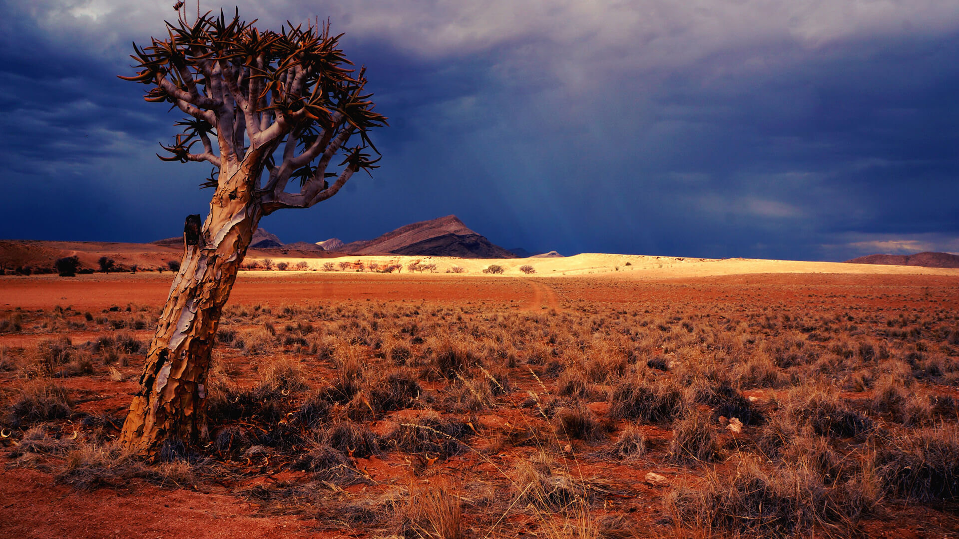 Familienreisen Namibia webook.ch