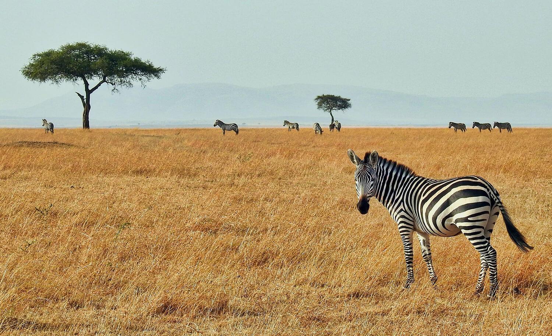 Afrika Reisen mit online Reisebüro webook