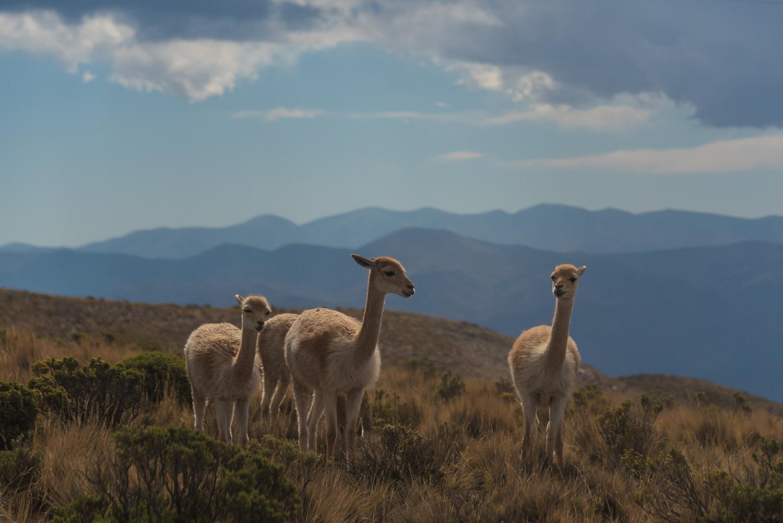 Argentinien Reisetipps online Reisebüro webook.ch